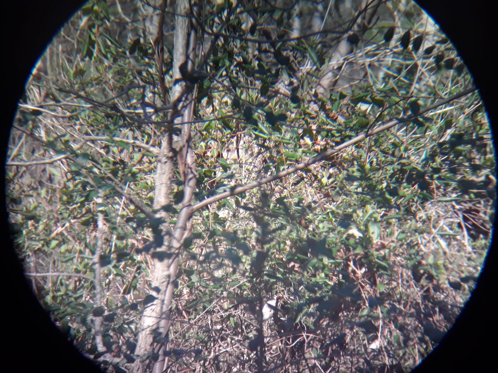 Wingspan Optics EagleScout 10X42 High Powered Binoculars Clarity